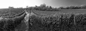 Header - Winery