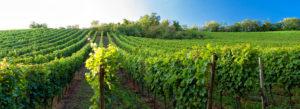 Header - Winery Vineyard